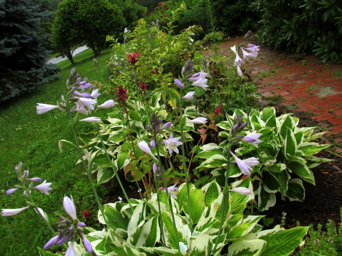 front border with hostas, bee balm, etc.