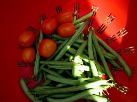 harvest 9 Aug