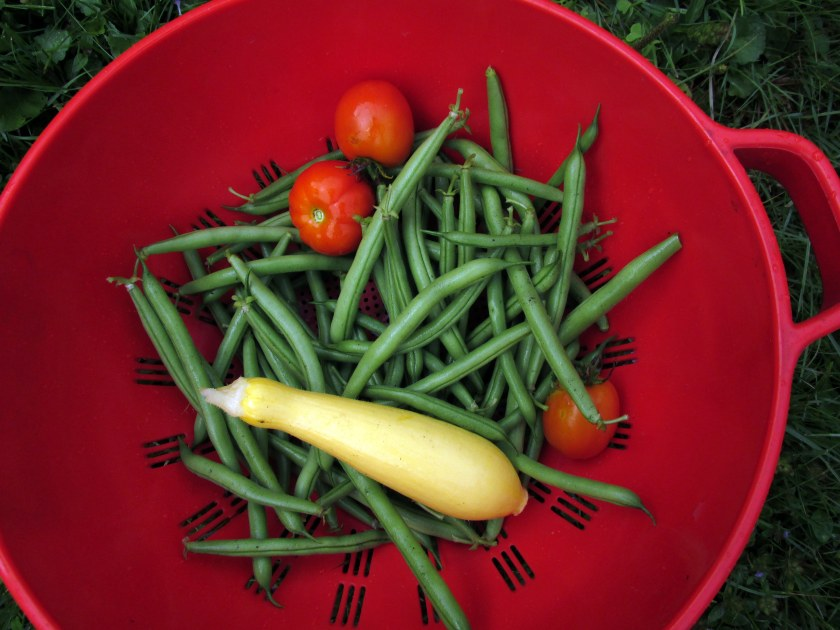 harvest!