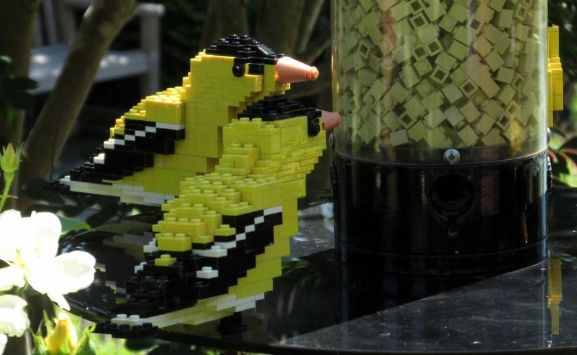 LegoGoldfinchfoodcloseGinterRichmond17July2016