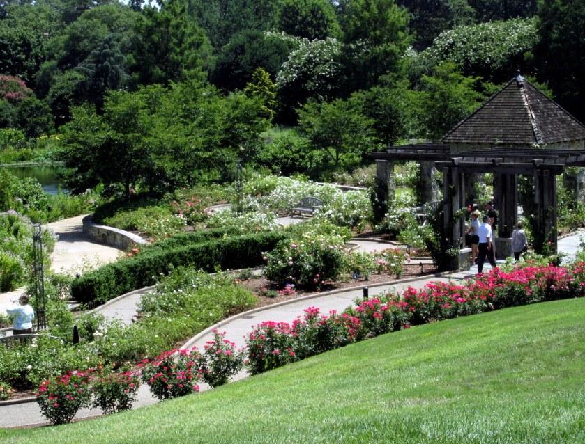 overlooking rose garden