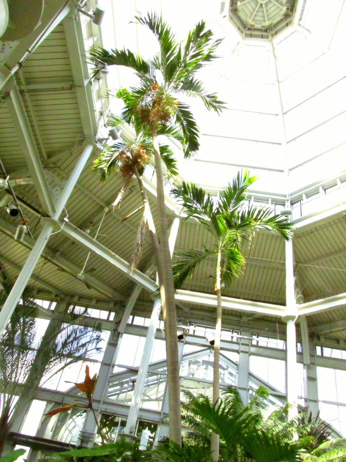 palm tree inside conservatory