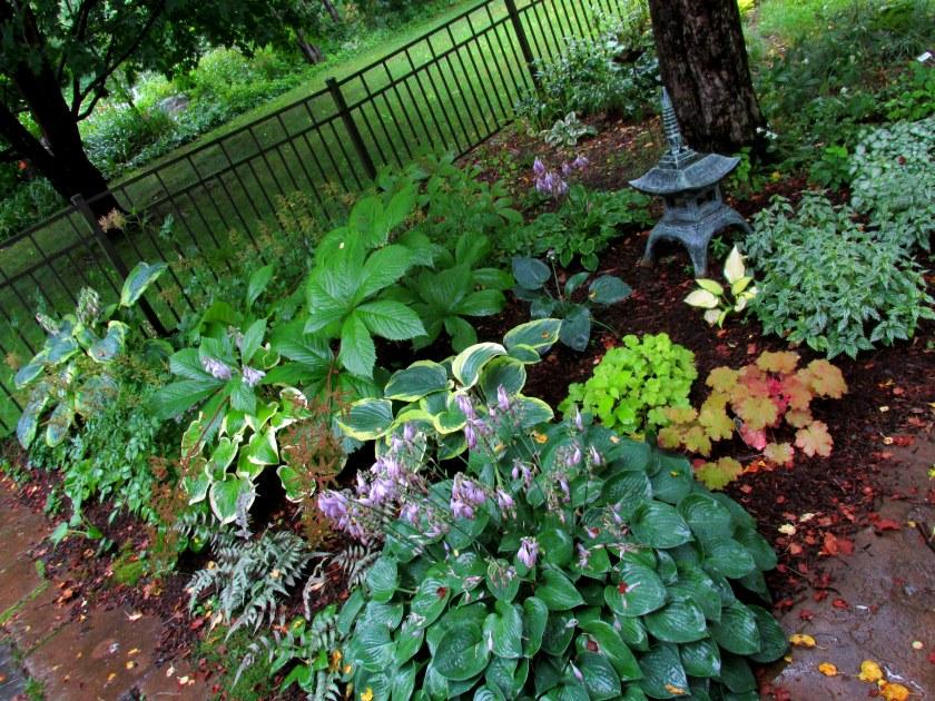 shade garden in rain