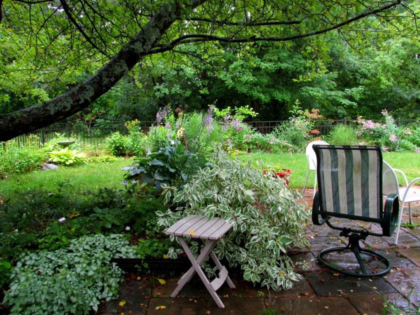 shade garden, patio, back border in rain