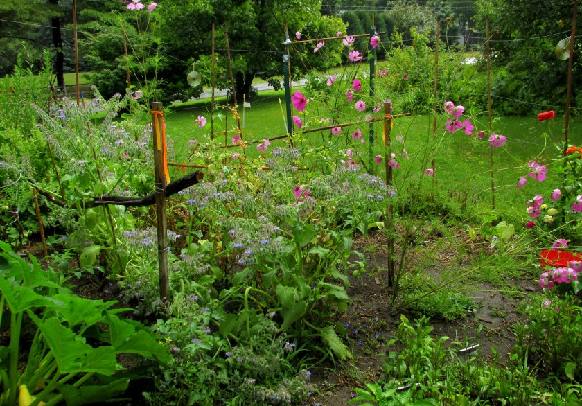 partial view from inside vegetable garden