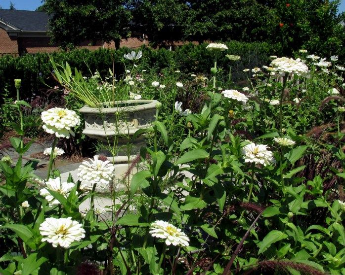 white zinnias, statue, in Meditation Garden