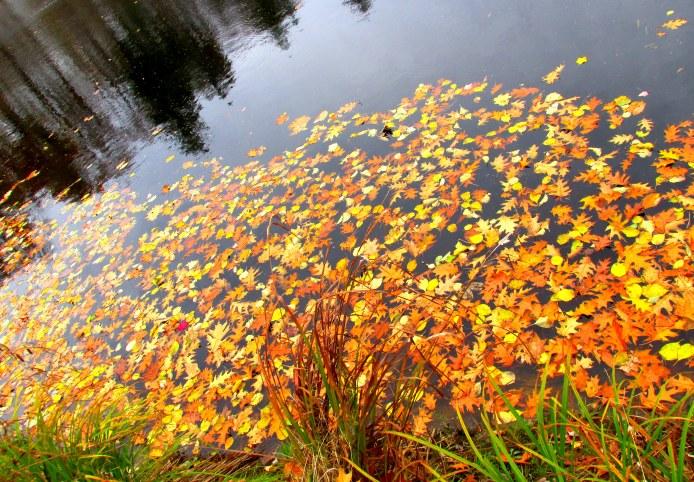 autumnleavesinponddiagonalcarterhillorchardwestendfarmtrail2nov2014