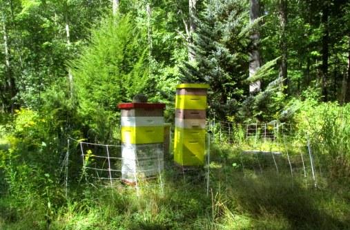 beehivesbedrockgarden17sept2016