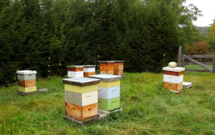 beehivesstillactivepathoflifewindsorvt7oct2016