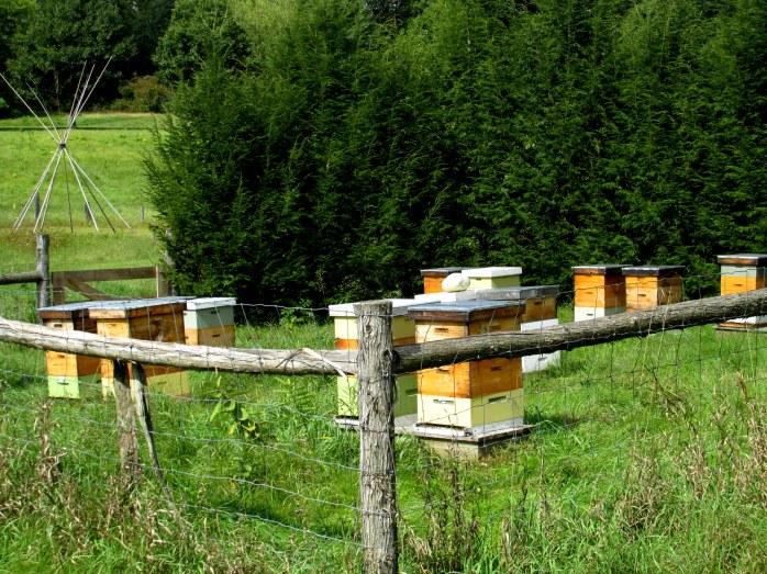 beehivesviewtosorrowpathoflifegardenwindsorvt20sept2015