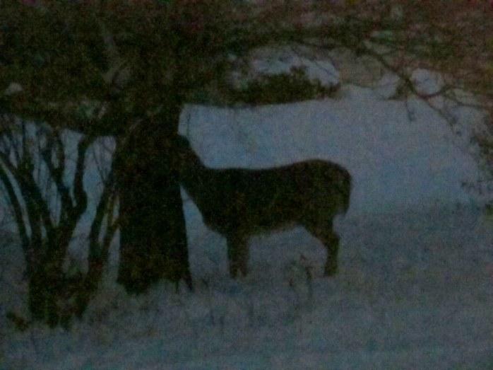 blurry deer, my yard, Dec. 2013