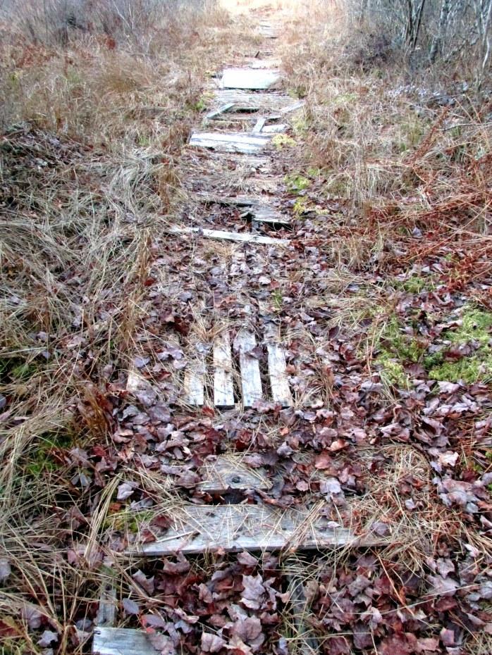 dilapidated boardwalk over marsh - Low Plains, NH, Nov. 2015