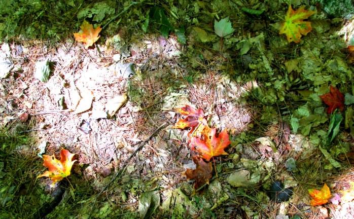 fall leaves in light