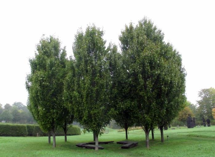 familytreespathoflifewindsorvt7oct2016