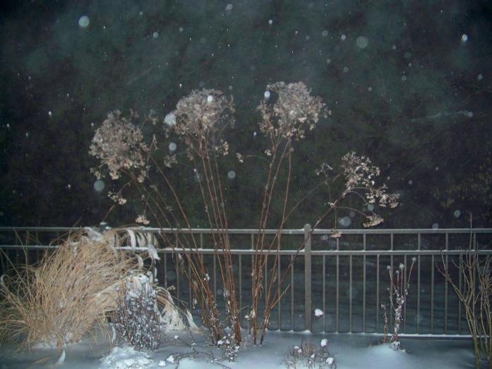 garden, Dec. 2012