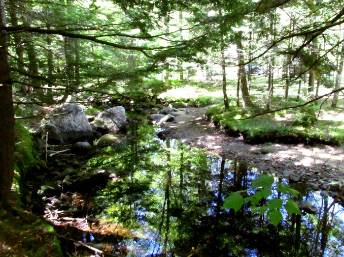 Kimpton Brook view