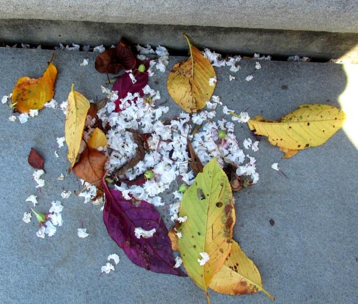 leaves, crape myrtle blossoms, Lewis Ginter Garden, Richmond, VA, July 2016