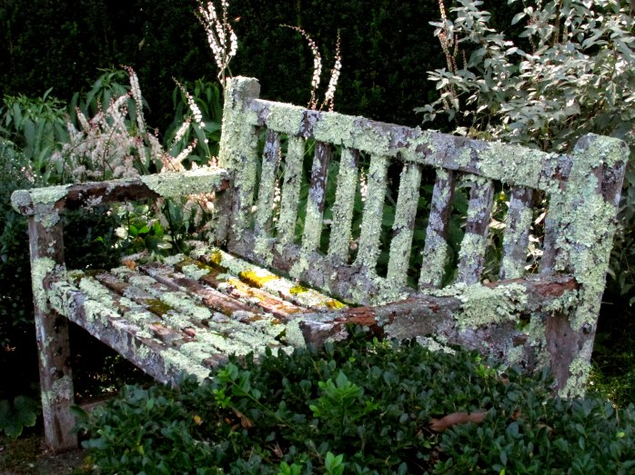 lichenised bench - Bedrock Gardens, NH, Sept 2016