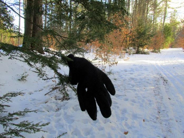 lost black glove, Low Plains, NH, Jan 2015
