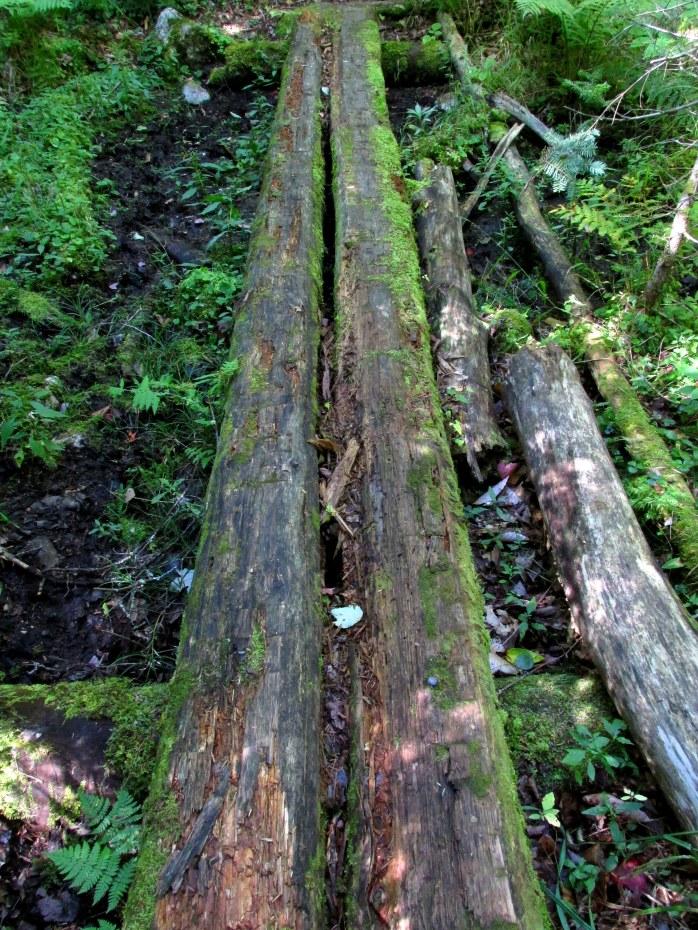 mossy log bridge