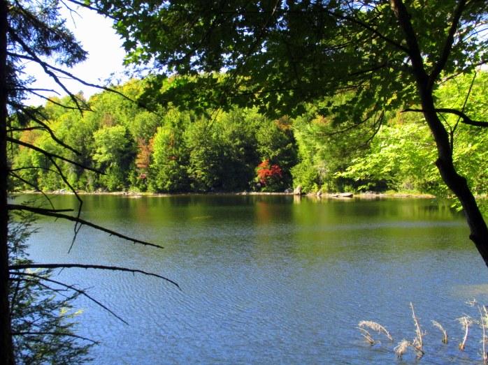 pond view through trees