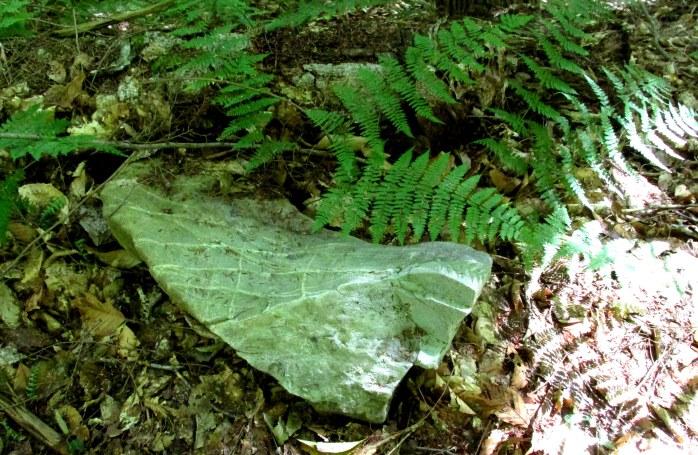 greenish rock and fern