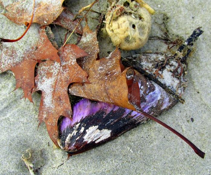 purplemolluskshelloakleavestableaupp11dec2015
