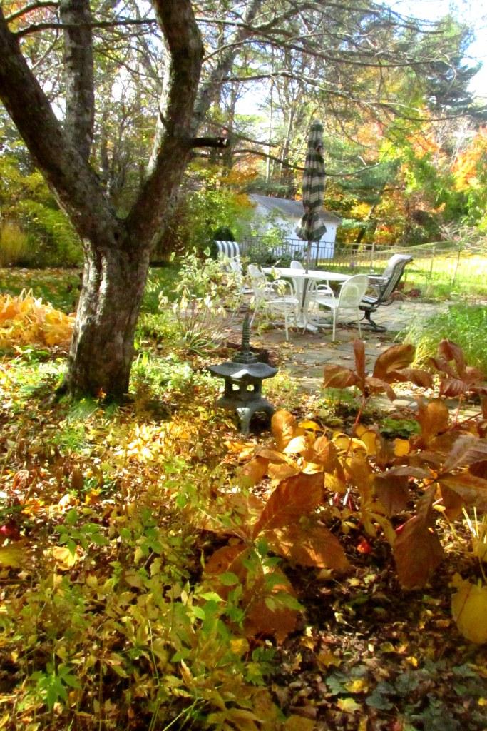 shade garden, 19 October