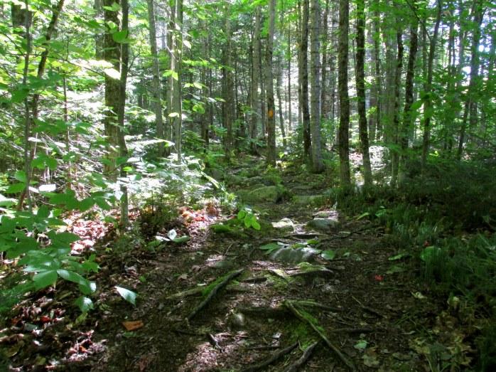 dappled light on trail