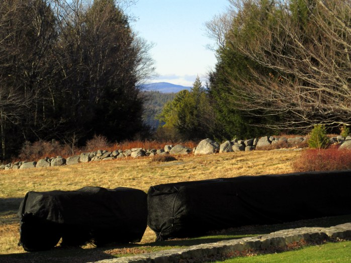covered yews, The Fells, NH, Nov 2015