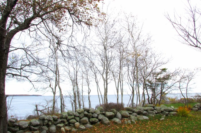 baretreesstonewalloceanodiornesp5nov2016