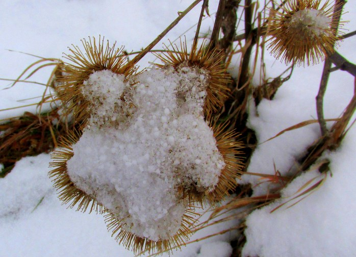 burrs in snow