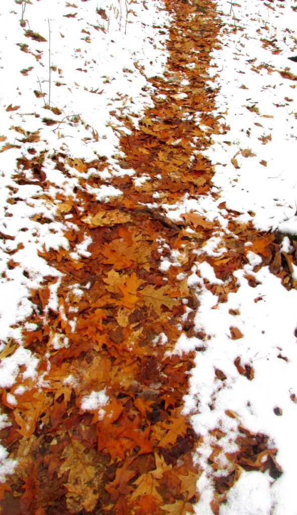 fall leaves in snowy trail