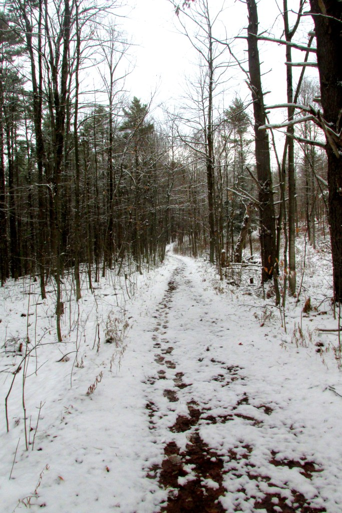 An old road forms part of the Means Woods Trail