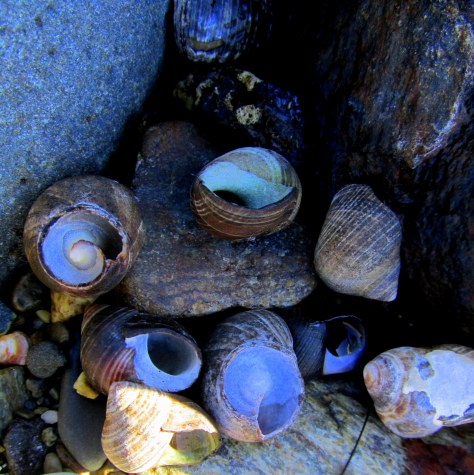 snailshellsodiornepointstateparkryenh29nov2014