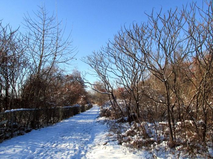 snowytrailandwallodiornepointstateparkryenh29nov2014
