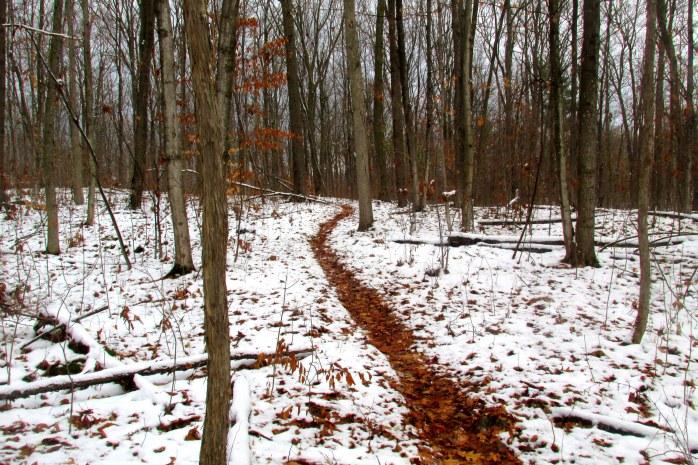 leafy trail through snow