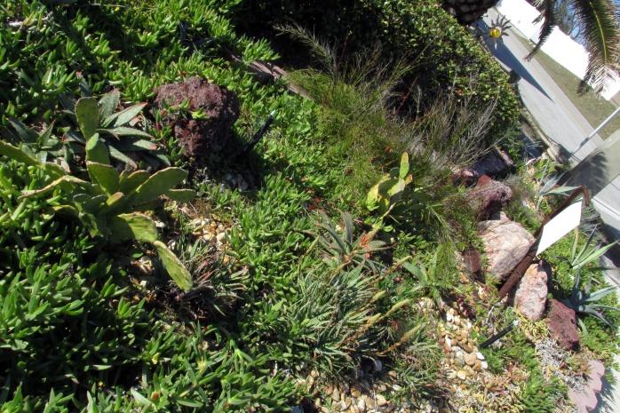 succulentgardenjasmineandfletcherbfernandinabeachfl22dec2016