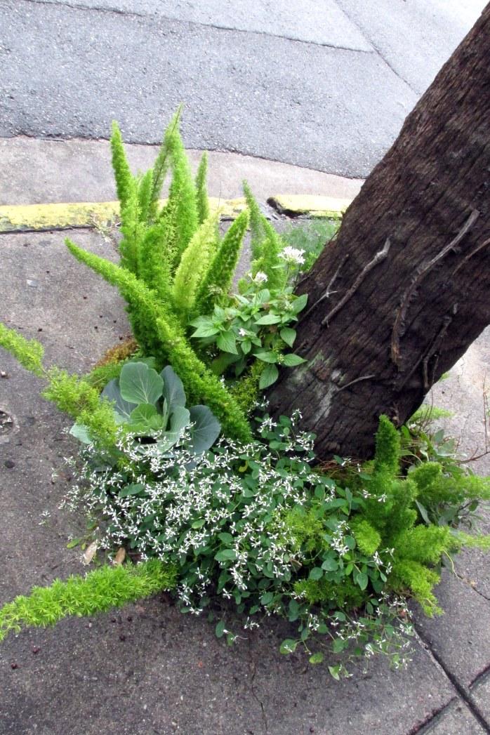 herbedibleplantingsidewalkbbullstsavannahga18dec2016