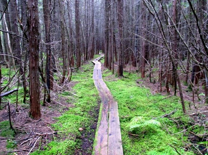 moss along boardwalk, seen in August