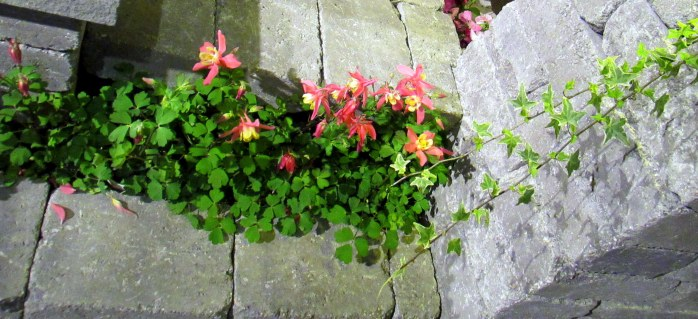 columbinepatiowallMartignettiBostonFlowerShow24March2017