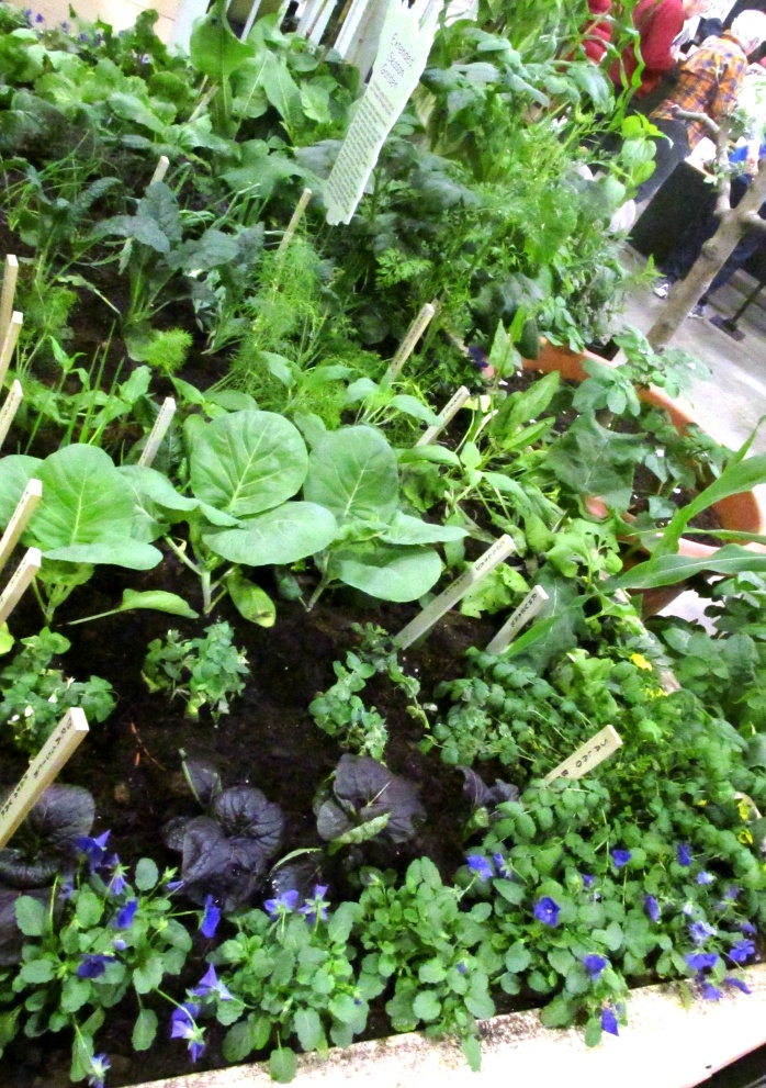 ediblesschoolplantingsMassHortSocietyBostonFlowerShow24March2017