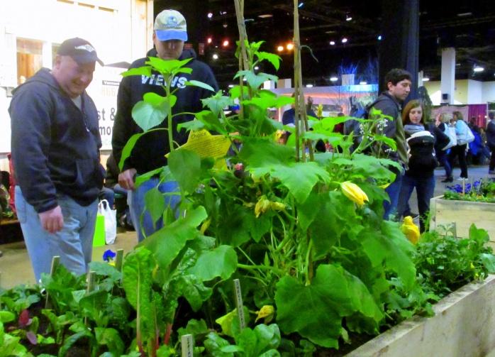 ediblesschoolplantingssquashsweetpotatocorianderpeopleMassHortSocietyBostonFlowerShow24March2017