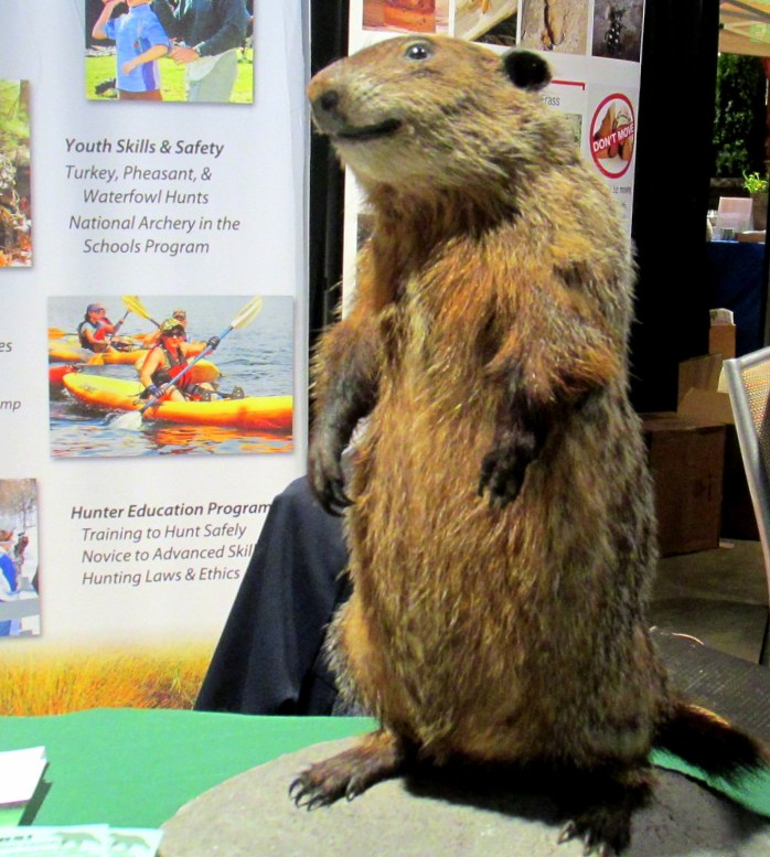 stuffedgroundhogMassWildlifeBostonFlowerShow24March2017