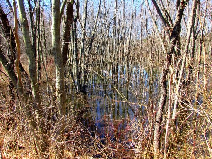 treesswampinessARTKeeneNH9April2017