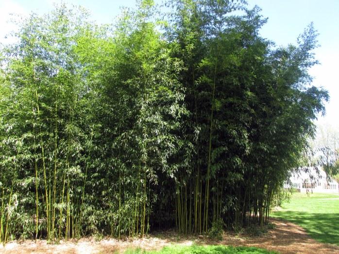 bamboostandBlithewoldBristolRI7May2017