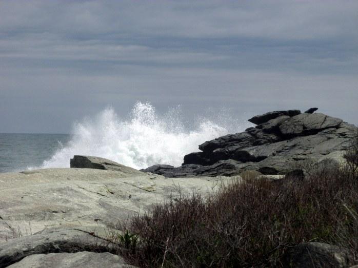 oceansprayledgeSachuestPointNWRMiddletownRI7May2017
