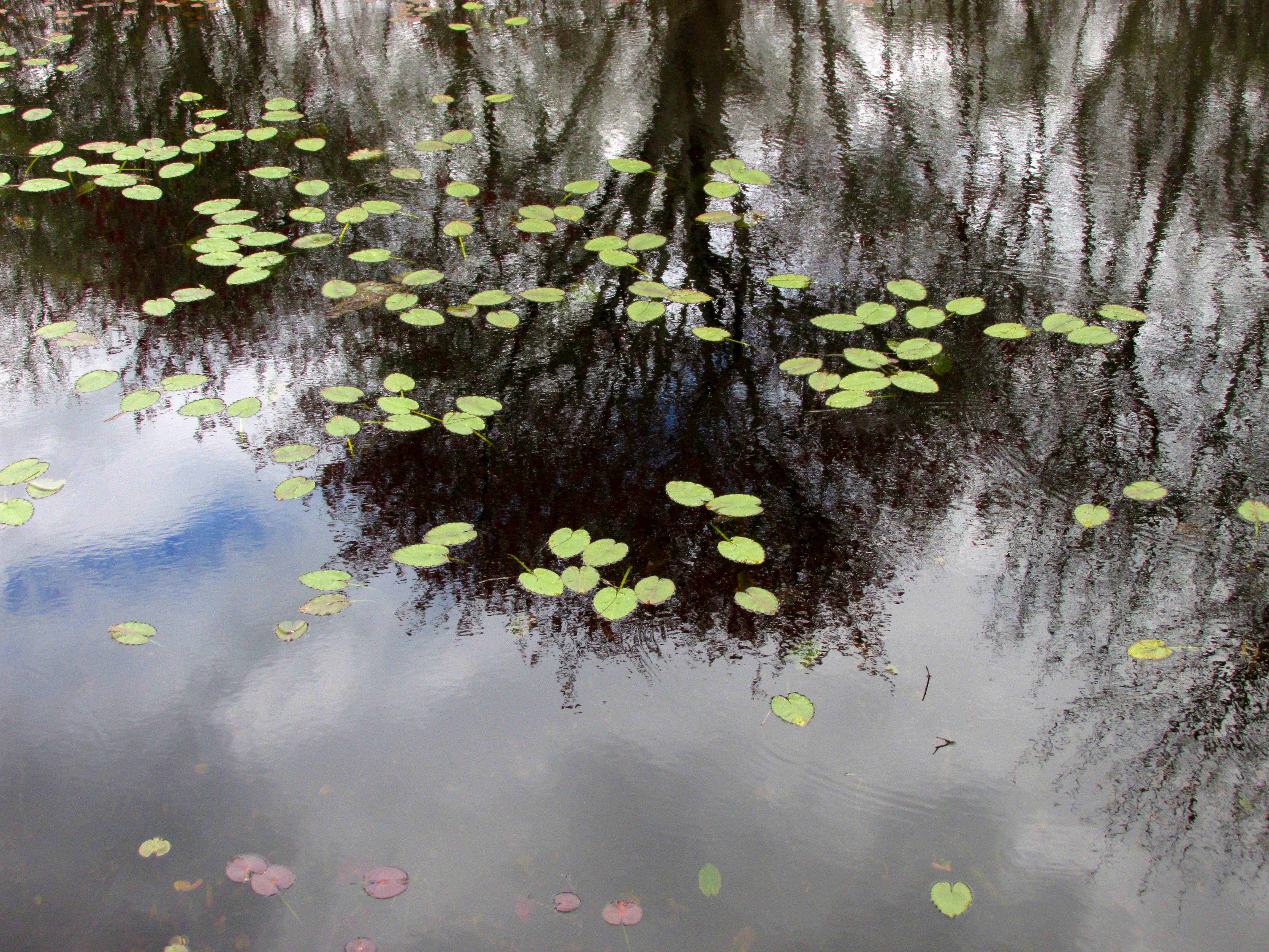 Vermont Zillow Slice Of Heaven Trustom Pond Nwr A Moveable Garden