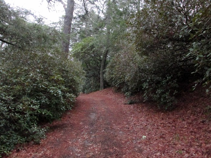 rhododendronwalkpathwayHeritageGardenSandwichMA26April2017