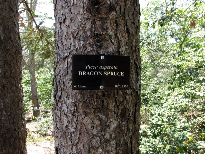 signDragonSprucetreeHeritageGardenSandwichMACC30April2017